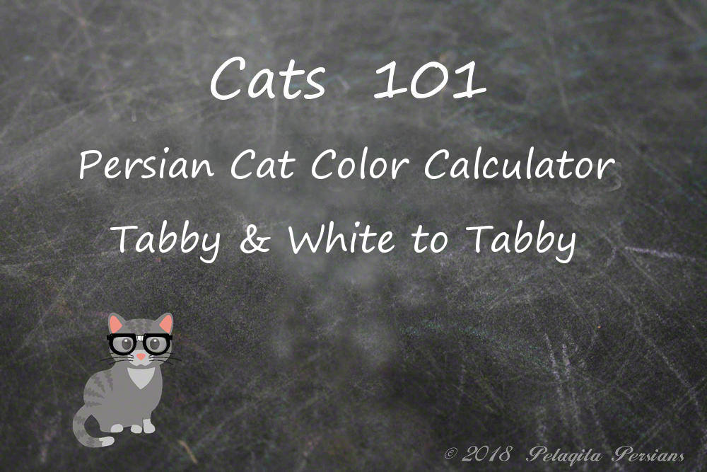 Persian cat color calculator - tabby and white to Tabby