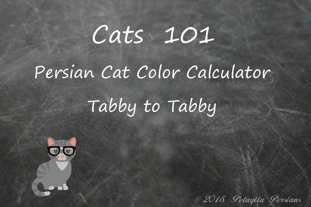 Persian cat color calculator - Tabby to Tabby color calculator