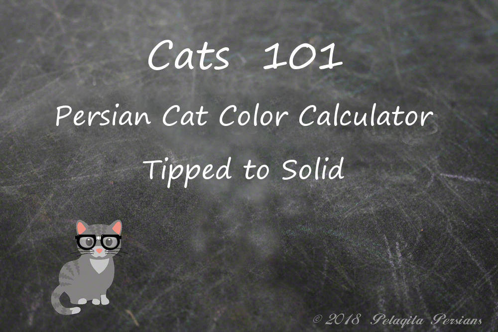 Persian Cat Color Calculator - Tipped to Solid Color Calculator