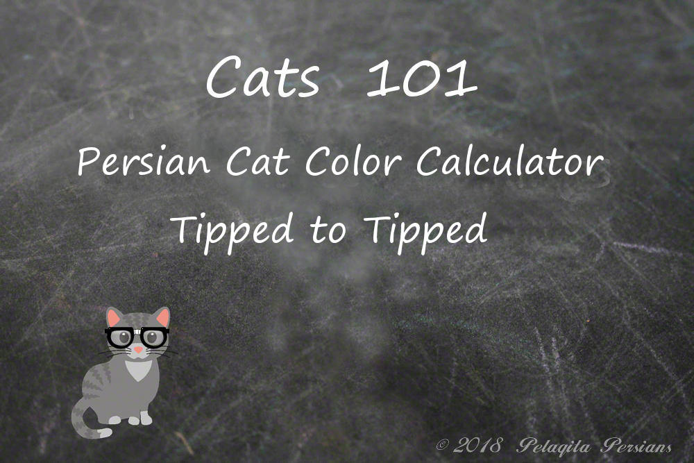 Persian cat color calculator - Tipped to Tipped color calculator