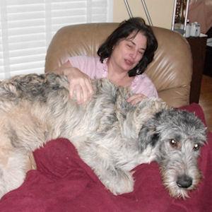 Irish Wolfhound laying on woman's lap