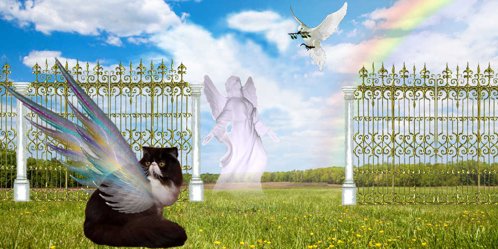 cat waiting at the pearly gates of heaven