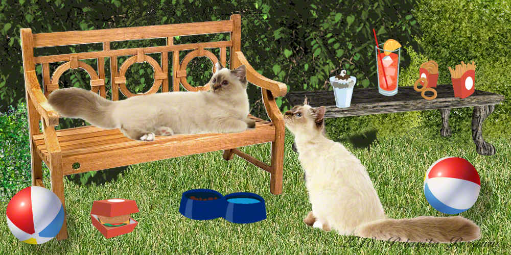 siamese cats relaxing on bench