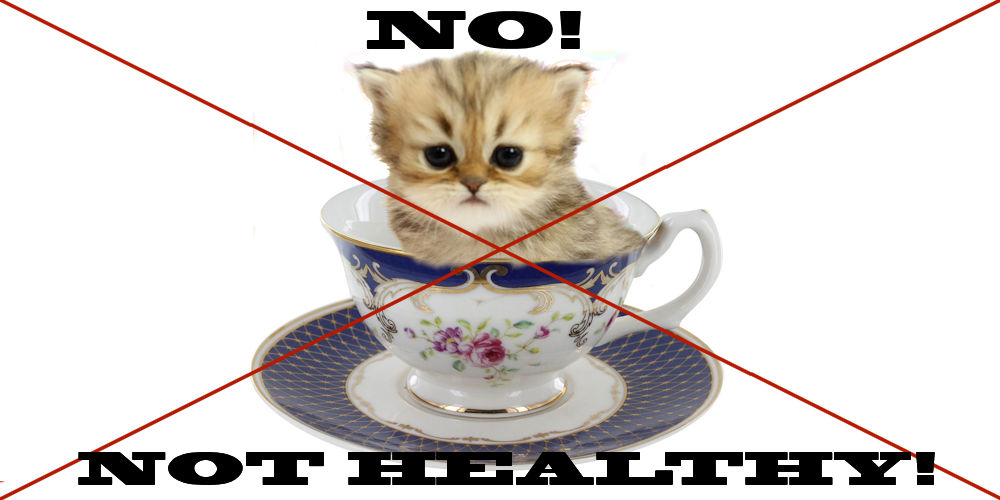 teacup persians - not healthy