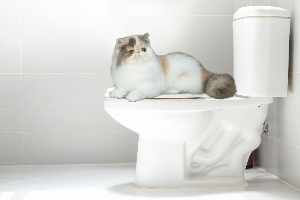 cat laying on toilet